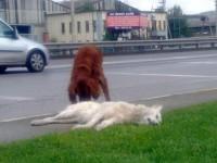 Bir Köpeğin Vefası
