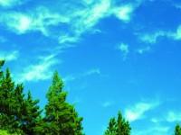 2011 Rüzgâr Yılı