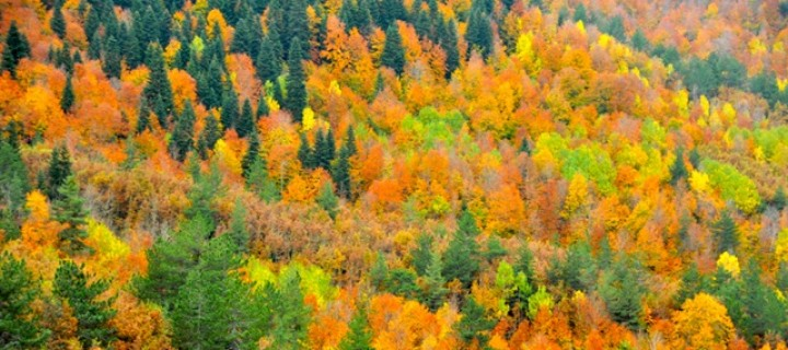 Doğa Korumaya, Doğa Koruma Yasasıyla Darbe