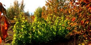 'Ah Bir Bahçem Olsa!' Diyenlere: Hobi Bahçeleri
