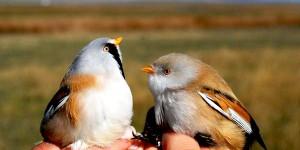 Kuyucuk'ta 220 Kuş Türü Halkalandı