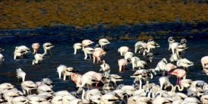 Ayvalık'ın Korunmayan Cennetleri: Ayvalık Sulakalanları