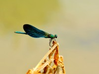 Safranbolu'nun Kelebekleri