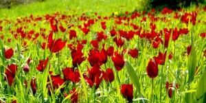 Kıbrıs Baharında Açan Çiçekler