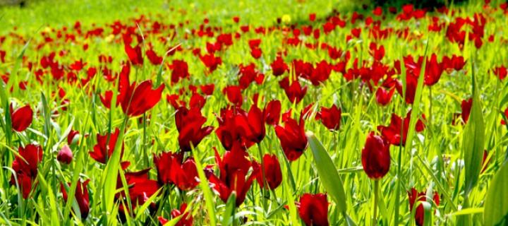 Kıbrıs Baharında Açan çiçekler Sırtçantam Gezi Ve Kültür Dergisi