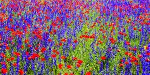 Anadolu Peyzajlarının Solan Renkleri