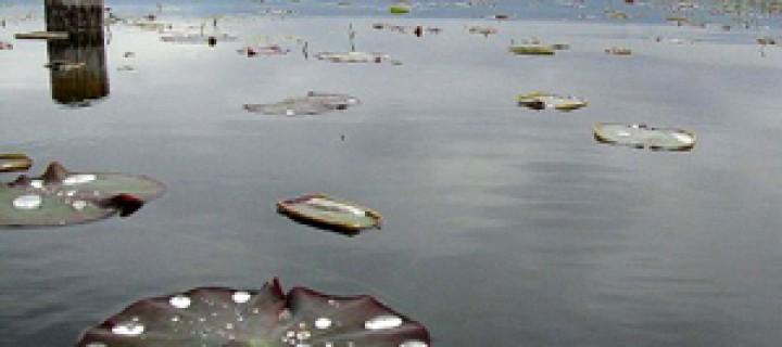 Varanasi: Sonsuz İnanç