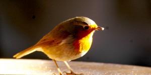 Almanya'nın Sevecen Kuşları