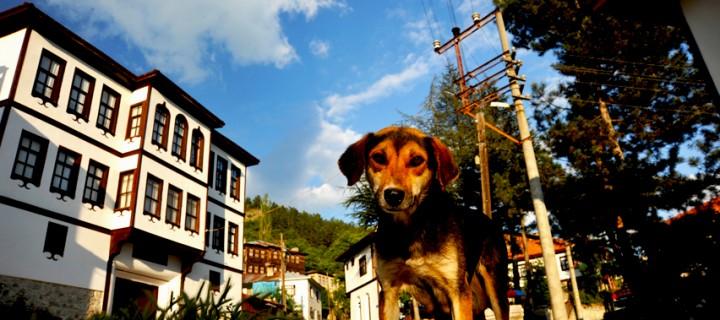 Fotoğraf ve Karabaş