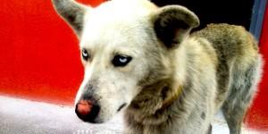 Mavi Bir Köpeğin Gözleri