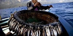 Yavru Balıklar Rahat Nefes Alacak