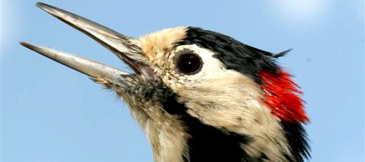 Dünya Göçmen Kuşlar Gününü Iğdır'da Kutladı