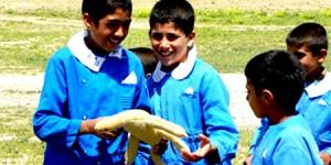 Çöl Varanı Köy Okullarında