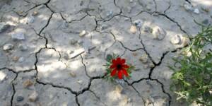 Doğa Talanına İzin Veren Kanun Tasarısı ve Değişiklikleri