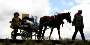 Develer ve Atların Dostluğu İle Bir Mutlu Kervan