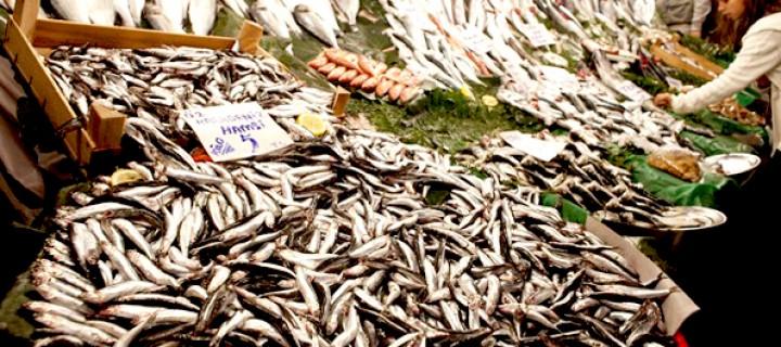 Yavru Balıklar İçin 416 Bin İmza