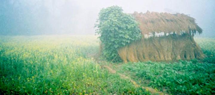 Şaman'a Giden Yol