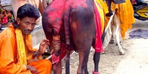 Pushkar – Ajmer