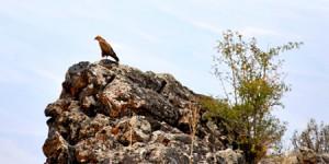 13. Türkiye Kuş Konferansı