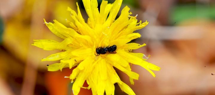 Bolu'nun Güz Çiçekleri