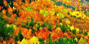 Batı Karadeniz'de Sonbahar