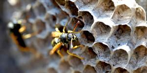 Arılar Balı Kimin İçin Yapar?
