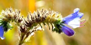 Çiçeklerin Peşinde