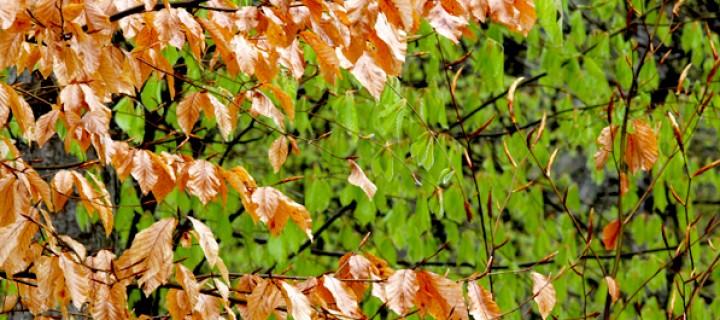 'Dış Mekân Bitkilerinde Budama, Saksı Değiştirme ve Çelik Alma' Semineri