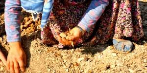 Türkiye'nin Kırsal Kalkınma Adımları Tartışıldı