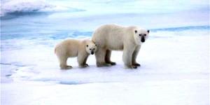 İklim Değişiyor, Denge Bozuluyor