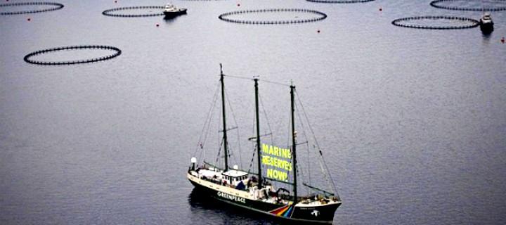 Orkinosların Geleceği İstanbul'da Tartışılıyor