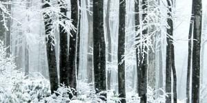 'Kar mı Yağmış Yüce Dağlar Başına'