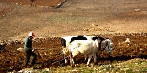 ODTÜ'de Permakültüre Giriş Kursu