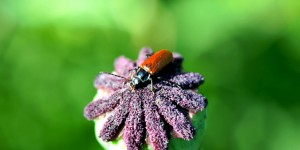 Böcek Şenlik Okulu