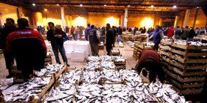 Halde Yüzlerce Kasa Yasadışı Balık