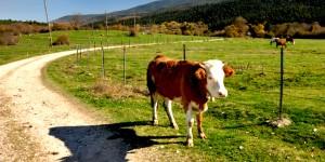 'Türkiye'nin Marka Değeri Temiz, Sağlıklı Hayvanlardan Sağılan Çiğ Süttür'