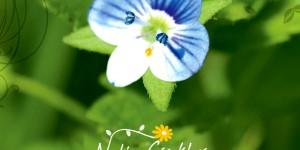 Nuh'un Çiçekleri Fotoğraf Albümü Yayımlandı