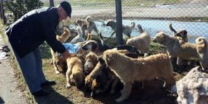 Kocaeli Büyükşehir, Sokak Hayvanlarını Unutmadı