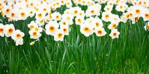 Çiçek Medeniyeti Seni Çağırıyor!
