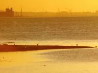 Marmara Denizi Adım Adım Tükeniyor!
