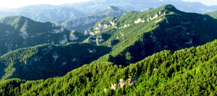 Yararsız Orman Yoktur