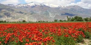 2011 Yılında Dünyada ve Türkiye'de Çevre Adına Neler Yaşandı? – 2