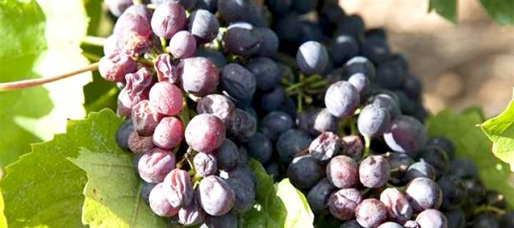 Pestisitsiz Gıda: Meyve ve Sebze için Alışveriş Rehberi