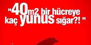 Kaş'taki Yunuslar İçin Başbakan Erdoğan'a 15 Bin İmza