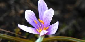 Nuh'un İlkbahar Çiçekleri
