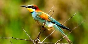 Baharın Müjdecisi Kuşlar Geliyor