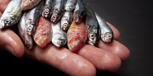 Balıkçılık ve Denizler İçin Yol Ayrımındayız!