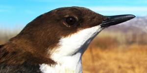 Türkiye'nin Kuşlarının Yarısı Iğdır'ın Yukarı Çıyrıklı Köyü'nde