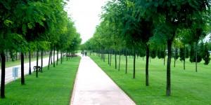 Kocaeli'de Her Çocuk İçin 15 Ağaç Dikildi