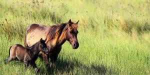 Gediz'in Vazgeçilmezi; Atlar